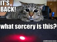 Silly kitty -- The laser! Funny Animal Memes, Funny Animal Pictures, Cat Memes, Funny Animals, Cute Animals, Animal Funnies, Funny Humor, Crazy Cat Lady, Crazy Cats