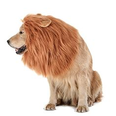 TOMSENN Dog Lion Mane - Realistic & Funny Lion Mane for Dogs - Complementary Lion Mane for Dog Costumes - Lion Wig for Medium to Large Sized Dogs Lion Mane Wig for Dogs - When it comes to buying gifts for their pet dogs, all dog owners find themselves in a fix – there simply aren't any good options to choose from! But that was until now – because now you have a perfectly cute & amazingly useful item that just makes total sense – Tomsenn...