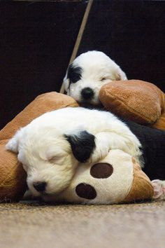 puppies by dewollewei, via Flickr