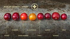 types of coffee cherry.  #cafe #coffee