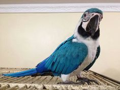 Pretty Birds, Cute Birds, Beautiful Birds, Animals Beautiful, Tropical Birds, Exotic Birds, Bird Pictures, Animal Pictures, Conure Bird