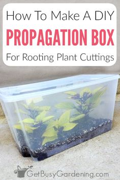 For home and beginning gardeners interested in learning how to grow from cuttings, a DIY propagation station can help ensure that you get strong, rooting cuttings of herbs, flowers, indoor plants and more. A homemade propagator box is much cheaper than many pre-made systems, and can even be free if you have the right container sitting around. My guide will walk you through exactly how to make a propagator, for a quick, one afternoon project that can help you experiment with all sorts of plants. Gardening For Beginners, Gardening Tips, Gardening Quotes, Gardening Books, Garden Plants, Indoor Plants, Flowering Plants, Water Garden, Potted Plants