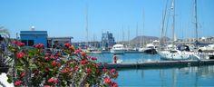 #MarinadelSur #Tenerife