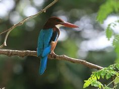Kaimur Wildlife Sanctuary - in Bihar, India