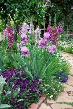 цветы многолетние миксборды низкорослые ландшафт - Поиск в Google