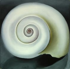 Georgia O'Keffe's shell