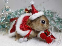 Cute Baby Merry Christmas   Cute Christmas Animal Bunny Santa Hat Suit