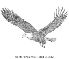 Bald eagle flying hand draw sketch black line on white background illustration. Tribal Tattoos, Eagle Tattoos, Tattoos Skull, Dope Tattoos, Celtic Tattoos, Wing Tattoos, Sleeve Tattoos, Fly Drawing, Eagle Drawing