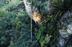 Around the world in photographs: Amazon/Jungle