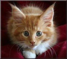 orange kitty....awww <3