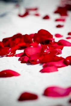 red rose petals Perfect Ending to a Perfect Valentines Day #LoveMyWay