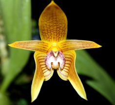 Orchids are amazing!