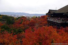 Autumn colors at Kiyomizudera, Kyoto.