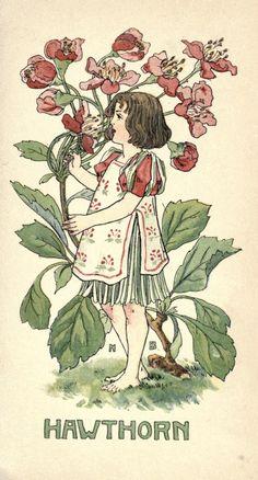 Illustration by Nellie Benson (1901)