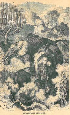 Antique Art Print African Elephants Engraving  by CarambasVintage, $16.00
