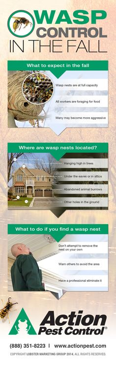 Wasp control in the fall  http://www.actionpest.com/blog/post/wasp-control-in-the-fall
