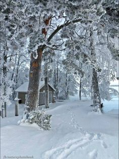 238 Best Winter Scenes images in 2017 | Winter scenes