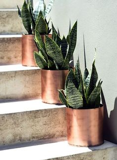 Green Thumb: The Easiest Indoor Plants to Grow In Your Home - Snake plants can have a very cool, modern look in a house—especially when they're planted in gorgeous copper pots like the repurposed ones above! The variegated leaves grow upright and can have yellow or white edges. You can grow these guys in pretty much any lighting condition; just be sure to keep the soil pretty dry most of the time.