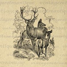 Printable Image Family of Red Deer Download Graphic Digital Illustration Antique Clip Art. High quality, high resolution digital illustration for printing, transfers, and many other uses. Real printable vintage art. Great for use on etsy items. This digital graphic is high quality, large at 8½ x 11 inches. Transparent background version included with all images.