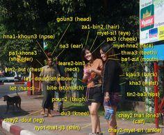 Body parts in Burmese