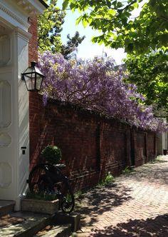 Over the garden wall in Alexandria, Virginia