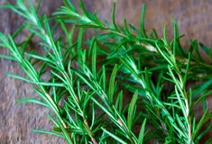 Repel mosquitoes with roesemary plants, this is great for kids and dogs   Homemade natural mosquito repellents by Pioneer Settler at http://pioneersettler.com/natural-mosquito-repellent-plants