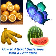 How To Attract Butterflies with a Fruit Plate
