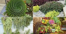 4 Ways to Design with Succulents: It is easier than you may think to incorporate these plants into your garden's design... #kalanchoe #succulentopedia #succulents #CactiAndSucculents #WorldOfSucculents #SucculentLove #succulent #SucculentPlant #SucculentPlants #succulentmania #SucculentLover #SucculentObsession #SucculentCollection #plant #plants #SucculentGarden #garden #DesertPlants #nature #SucculentCare #GrowingSucculents #gardening #GardeningTips