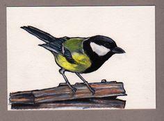 Great tit, colour pencil drawing https://www.etsy.com/shop/JimGriffithsArt?ref=hdr_shop_menu