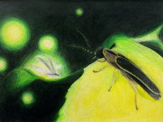 "1st in a series of drawings inspired by ""Fireflies"" by Owl City - colored pencil"