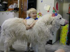 A Great Pyrenees. I want one, they're big friendly giants!  (And wonderful caretakers of Alpacas.)