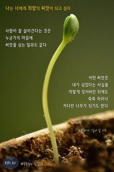 사람이 잘 살아간다는 것은 누군가의 마음에 씨앗을 심는 일과도 같다.    어떤 씨앗은 내가 심었다는 사실을 까맣게 잊어버린 뒤에도 쑥쑥 자라나 커다란 나무가 되기도 한다.   - 오늘 내가 살아갈 이유  #톡톡힐링 Wise Quotes, Inspirational Quotes, Korean Language, Poems, Messages, Writing, Sayings, Mindset, Board