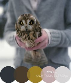 owl color inspiration