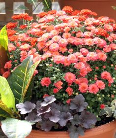fall planters and gardening tips, container gardening, gardening, seasonal holiday d cor, Brilliant colors of Autumn