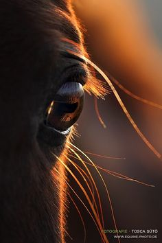 Equine eye. Horses know instinctively who they can trust on their back....... they have innate good taste.