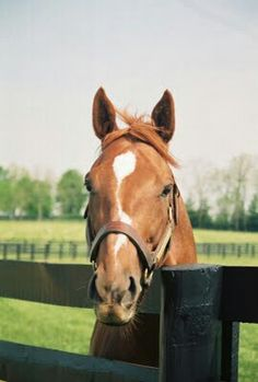 Charismatic. (1996-). 1999 Horse of the Year