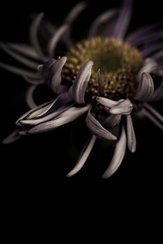 Roaming the garden at night and finding Zombie flowers by Alan Shapiro on Dark Flowers, Beautiful Flowers, Beautiful Pictures, Floral Photography, Dark Photography, Still Life Photography, Garden Drawing, Midnight Garden, Gardens