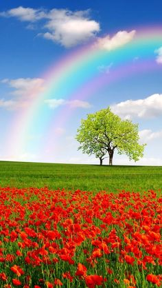 """Life is like a rainbow. You need both the sun and the rain to make its colors appear."""