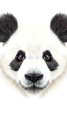 Cute, funny wallpaper for iphone or android Panda Sketch, Panda Drawing, Animal Sketches, Animal Drawings, Cute Drawings, Panda Love, Cute Panda, Animals And Pets, Baby Animals