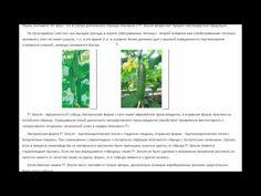 Огурец F1 ЗОЗУЛЯ ( ТСХА 77 )  урожай 40 кг м2 и более