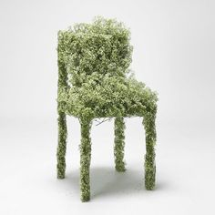 London designer Asif Khan has produced an installation of chairs and tables made of freeze-dried flowers as part of the Designers in Residence program at the Design Museum London. Freeze Dried Flowers, Design Museum London, Babys Breath Flowers, Installation Art, Garden Art, Garden Ideas, Harvest, Floral Design, The Incredibles
