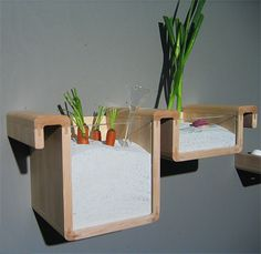 Storing root vegetables vertically keeps them fresher longer. (The glass funnel is used to keep the sand moist.)