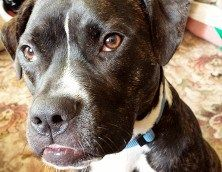 Animal Helpline Dog Rescue Special Appeal   Shalini's Weblog