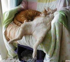 Sleepers!
