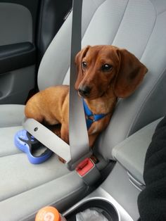 captivating-animals:  Buckle Up by ~SinissterKid