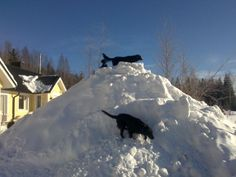 Dogs enjoying the pile of snow.