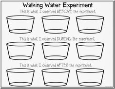 Water Walk Experiment FREEBIE and Bumblebees Close Read (First ...
