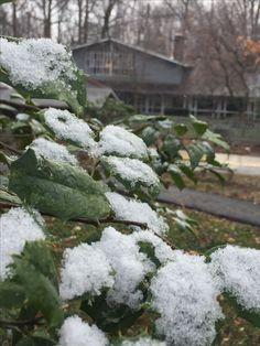 It's turning into winter at Cedar Lane!  #unitarianuniversalist #uufaith #uuchurch #unitarianuniversalism