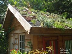 Basic container roof garden