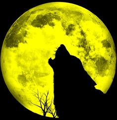 My work in progress is a romantic fantasy staring a female werewolf. She doesn't look like a half-woman half-beast in her wolf form. Rather, she looks like a very large wolf.